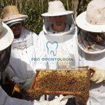 Projeto visa monitorar mortandade de abelhas
