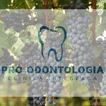 Colheita da uva confirma qualidade